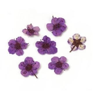 Gedroogde bloemen paars hars sieraden maken epoxy