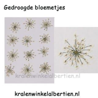 Droog bloem wit sieraad maken hanger epoxy giethars