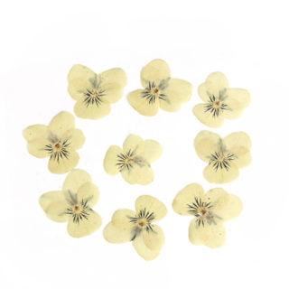 Gedroogde bloemen viooltje geel DIY gieten in hars glas