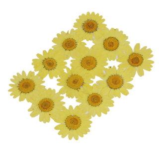 Chrysant geel gedroogd DIY sieraden maken glas hars transparant