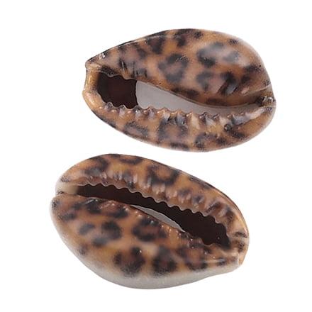 Leopard print schelpjes open kauri tussenzetter