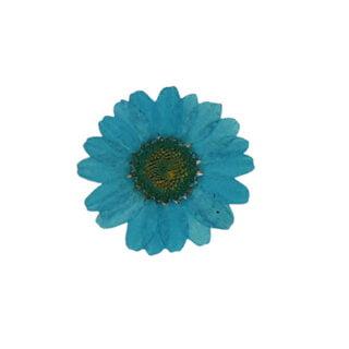 Droogbloemetjes klein blauw crysant resin art