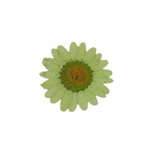 Groene gedroogde bloemen chrysanten